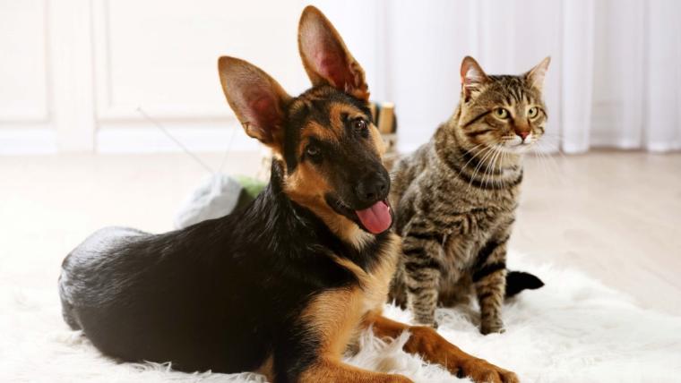 Szczęśliwe zwierzaki, czyli najlepsza dieta domowego pupila