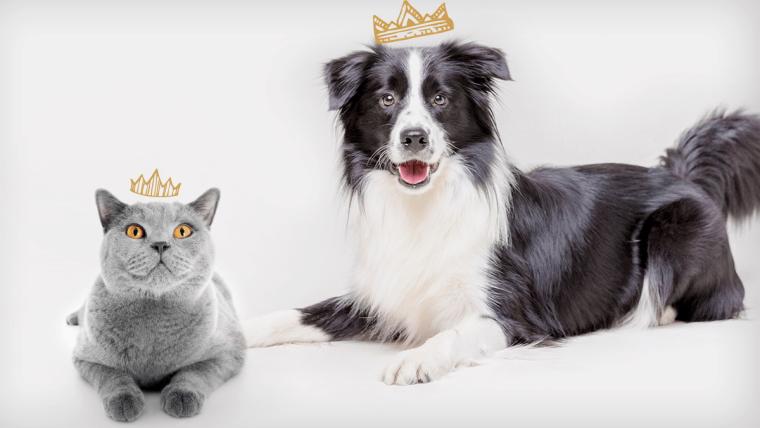 Zabawy z psem i kotem: zwierzęta też nudzą się w deszcz